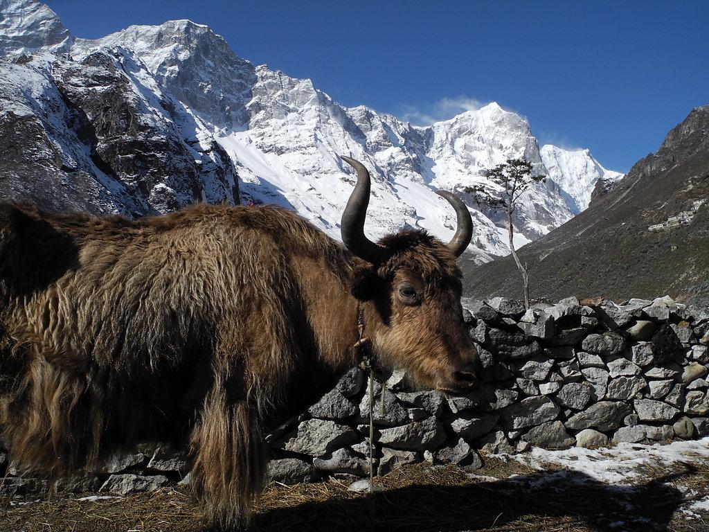 Thame (3800m)